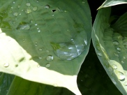 Using the macro function to photograph water on a leaf