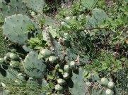 Cacti in La Roque sur Cèze