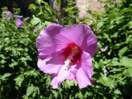 Flower in Cornillon