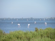 A flamboyance of flamingos!