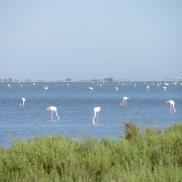 A flamboyance of flamingos!