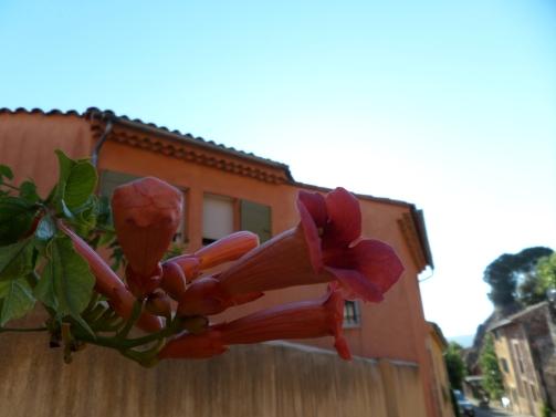 Fleur de Rousillon!