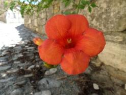 Flower in La Roque sur Cèze
