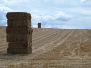 Landscape art with hay bales