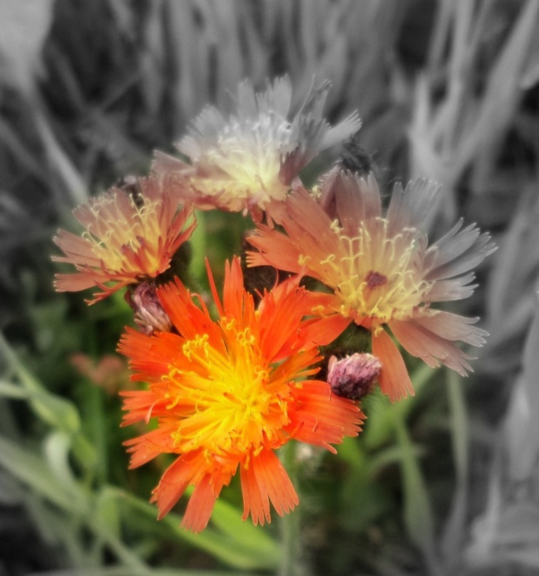 A Pop Of Colour.edited